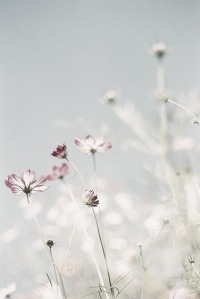 flors 00