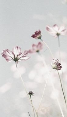 flors 01