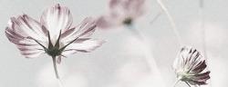flors 02