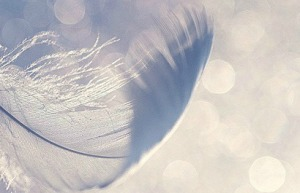 Airy feather_balckRose3485_Flickr 01