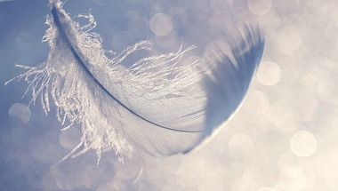 Airy feather_balckRose3485_Flickr