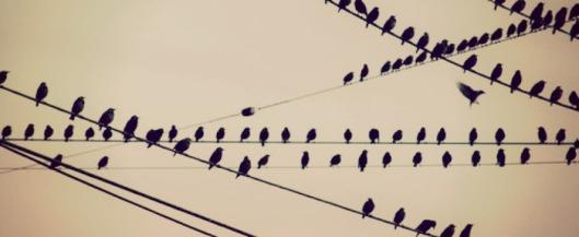 eldasign_ocells 00