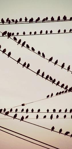 eldasign_ocells 01