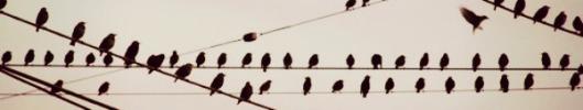 eldasign_ocells 02