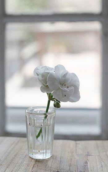 whiteflower_flickr.com